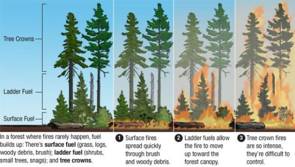 Image result for forest fire crown fire