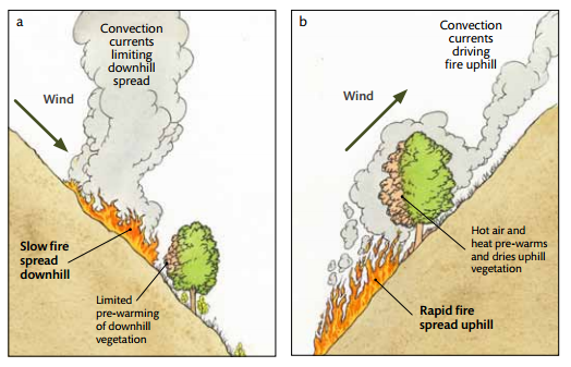 forest-fires-2